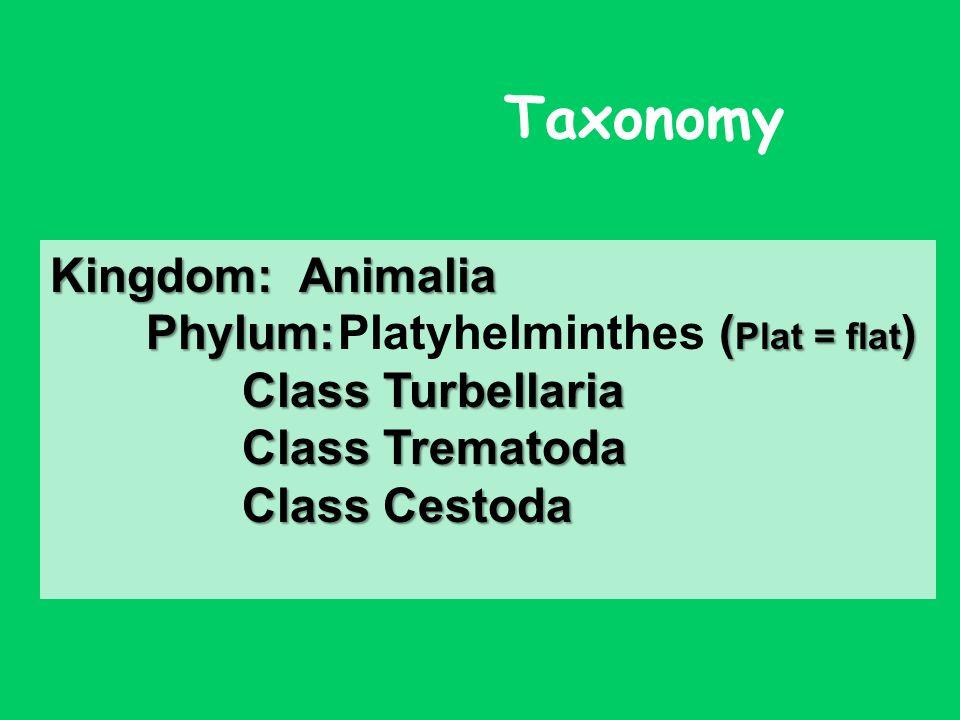Phylum platyhelminthes taxonómia - Tartalomjegyzék