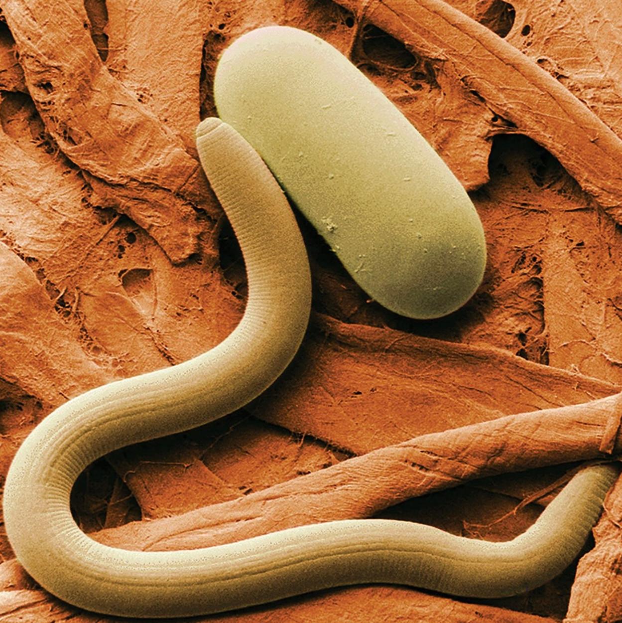 paraziták antibiotikumos kezelése