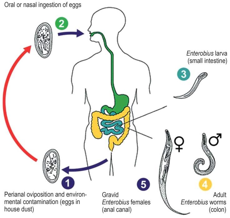 Enterobiosis giardiasis,