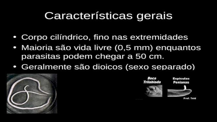Filo nemathelminthes caracteristicas - thetagodollo.hu