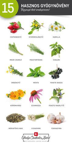 Gyógynövények férgek fotó, Hering kezelése a paraziták számára. Навигация по записям
