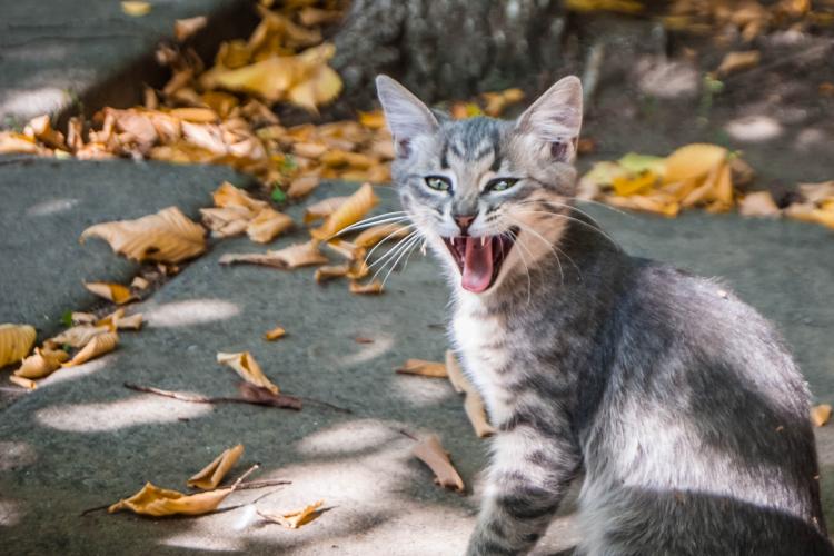 macska szaga milyen drogokat használnak a férgek megelőzésére