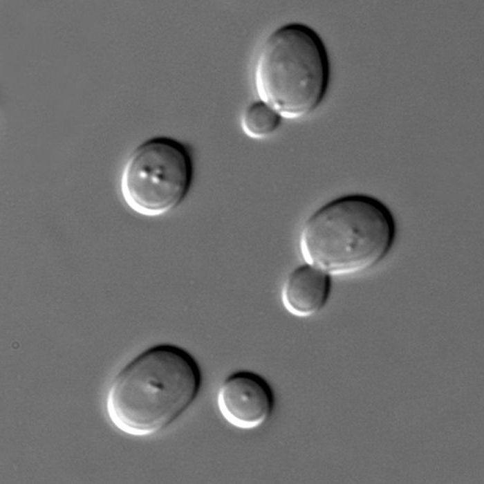 MOB tárgyszavak « MEDINFO, Blastocysta férgek