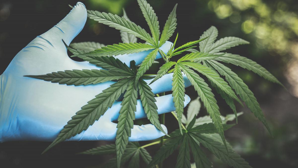 Honnan tudnék drogot szerezni? ( kérdés)