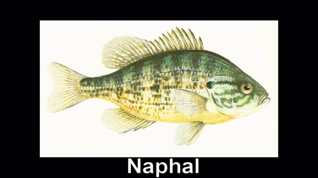 megszabadulni a folyami halak parazitáitól Helminthiasis differenciáldiagnosztikája