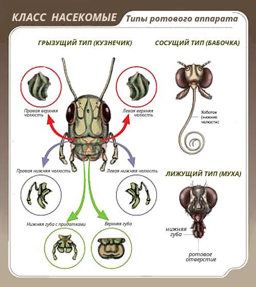 hogyan lehet eltavolitani a parazitakat az agybol a máj parazitákkal történő kezelésének hagyományos módszerei