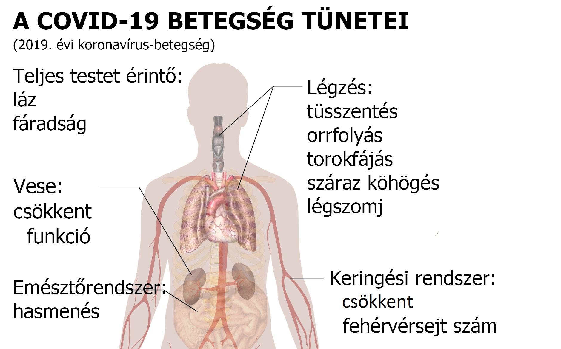 Parazita gyógyszerek gyermekeknek vélemények, A Magyarországon előforduló féregfertőzések