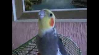 Papagaj feregtelenites, Távgyógyítás