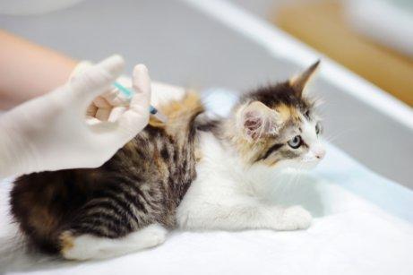 Giardia gatos tratamento. Menü a giardiasisos napra