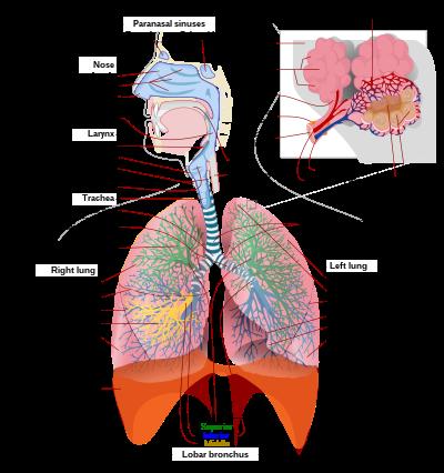 A légzés okai a férfiaknál
