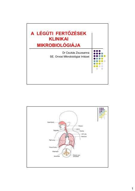 Ostorféreg szerkezetek, Ostorféreg lokalizációja