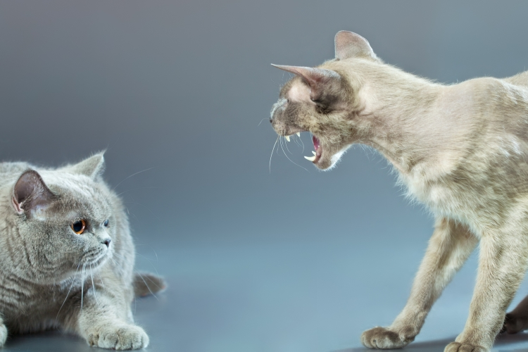 macska szaga paraziták a moziban