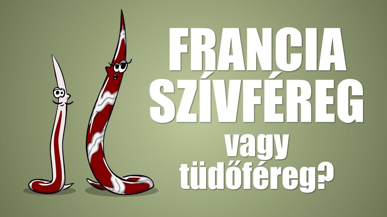 francia szivfereg