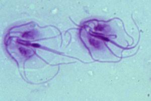 az emberekre veszélyes folyami paraziták