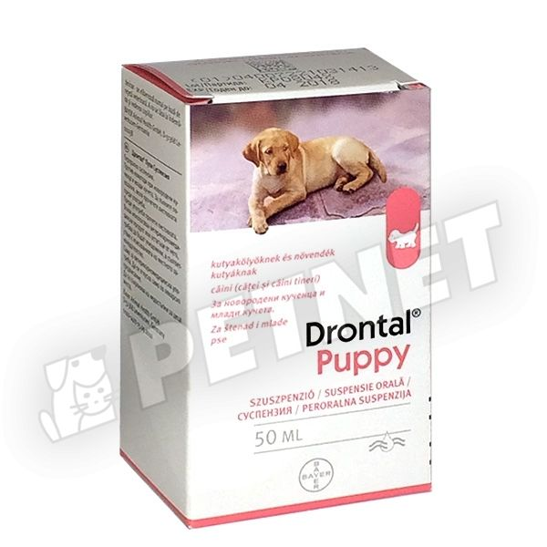 FéreghajtóKutya - ÁLLATGYÓGYSZEREK - Állateledel - felszerelés - állatgyógyszer