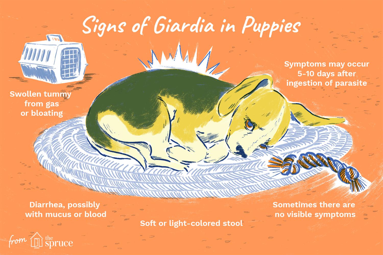giardia symptoms