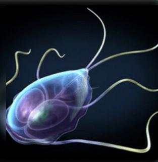 Hogyan kell ürömöt megszabadulni a parazitáktól: séma, receptek és hasznos tulajdonságok