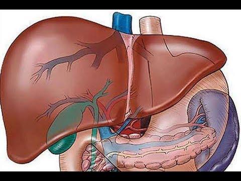 Máj parazita fluke népi gyógyszerek, Féreg invázió a májban - Májgyulladás -
