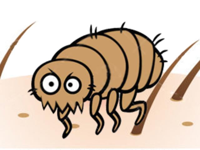kagylóbőr paraziták az ízületi betegségek parazitái