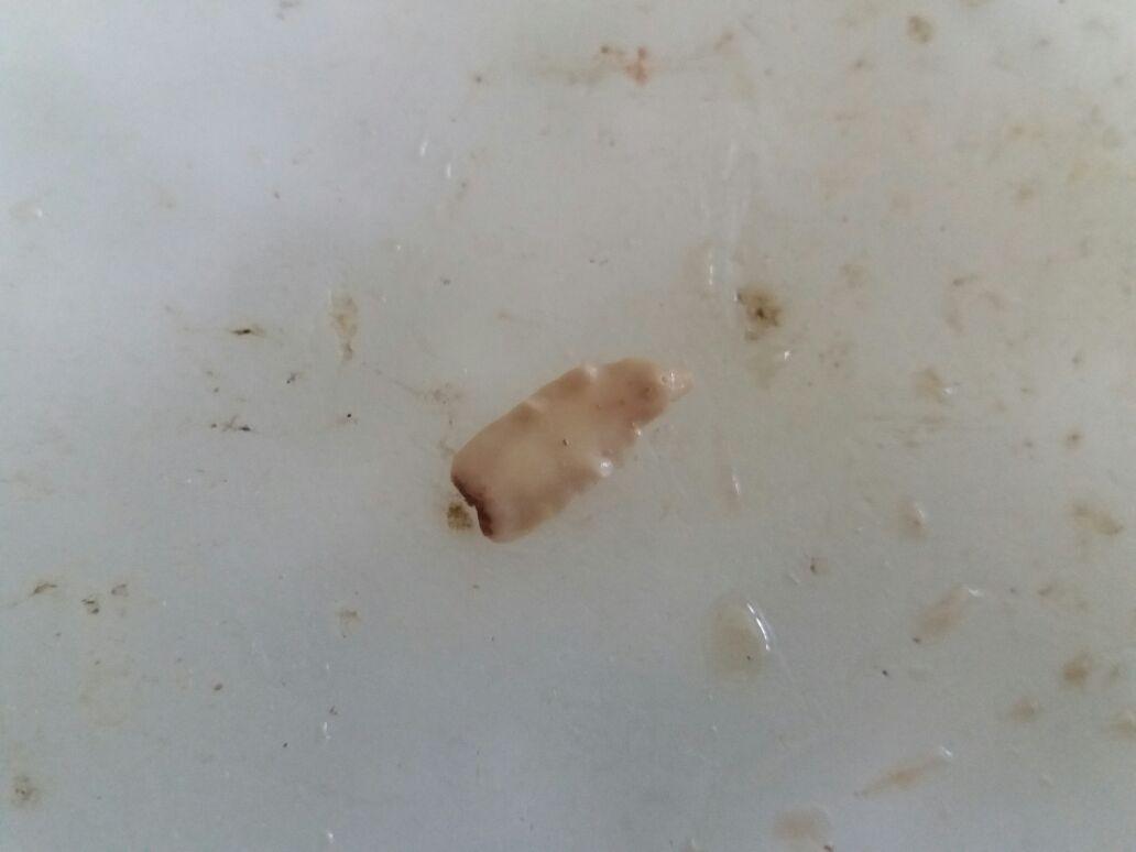 Laporan filum platyhelminthes - thetagodollo.hu