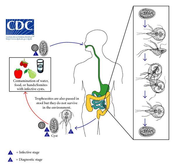 gyógynövényekkel történő helminták kezelése gyógyszerek az emberi test parazitáinak kezelésére