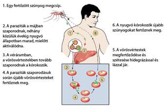 baba torokfájás tünetei paraziták vélemény telek