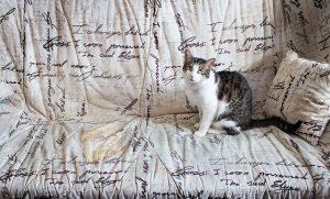 Macska-csata | thetagodollo.hu