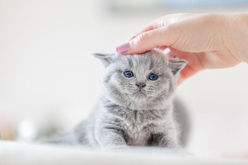 Macskák féregtelenítése – minden, amit erről tudni kell