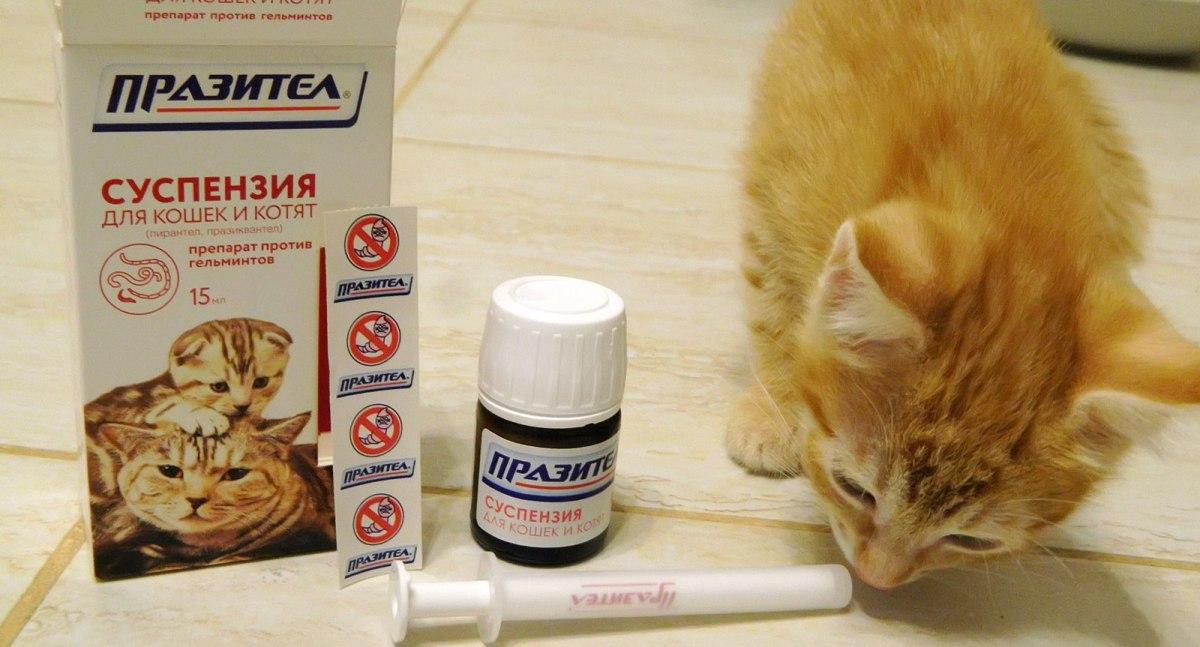 Férgekből és férgekből származó termékek, Vannak férgektől származó férgekből származó tabletták