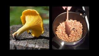 Gyógyszer a rókagombákból származó paraziták nélkül.
