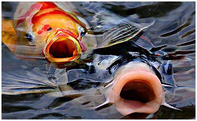 hogyan lehet kezelni a helmintákból származó halakat