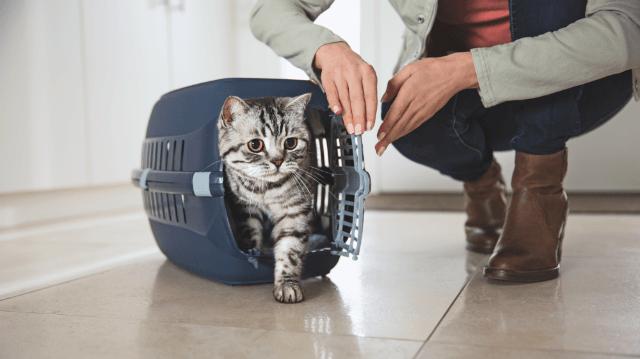 macska szaga milyen férgek vannak felnőttekben