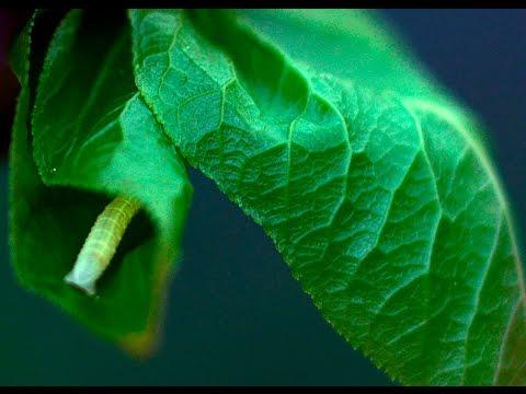 milyen gyógynövényeket távolítanak el a férgek