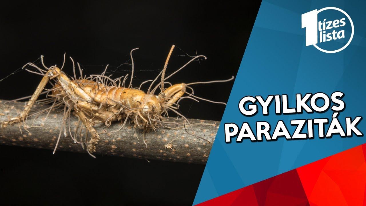 parazita jelenet a legjobb széles spektrumú antihelminthikus gyógyszer