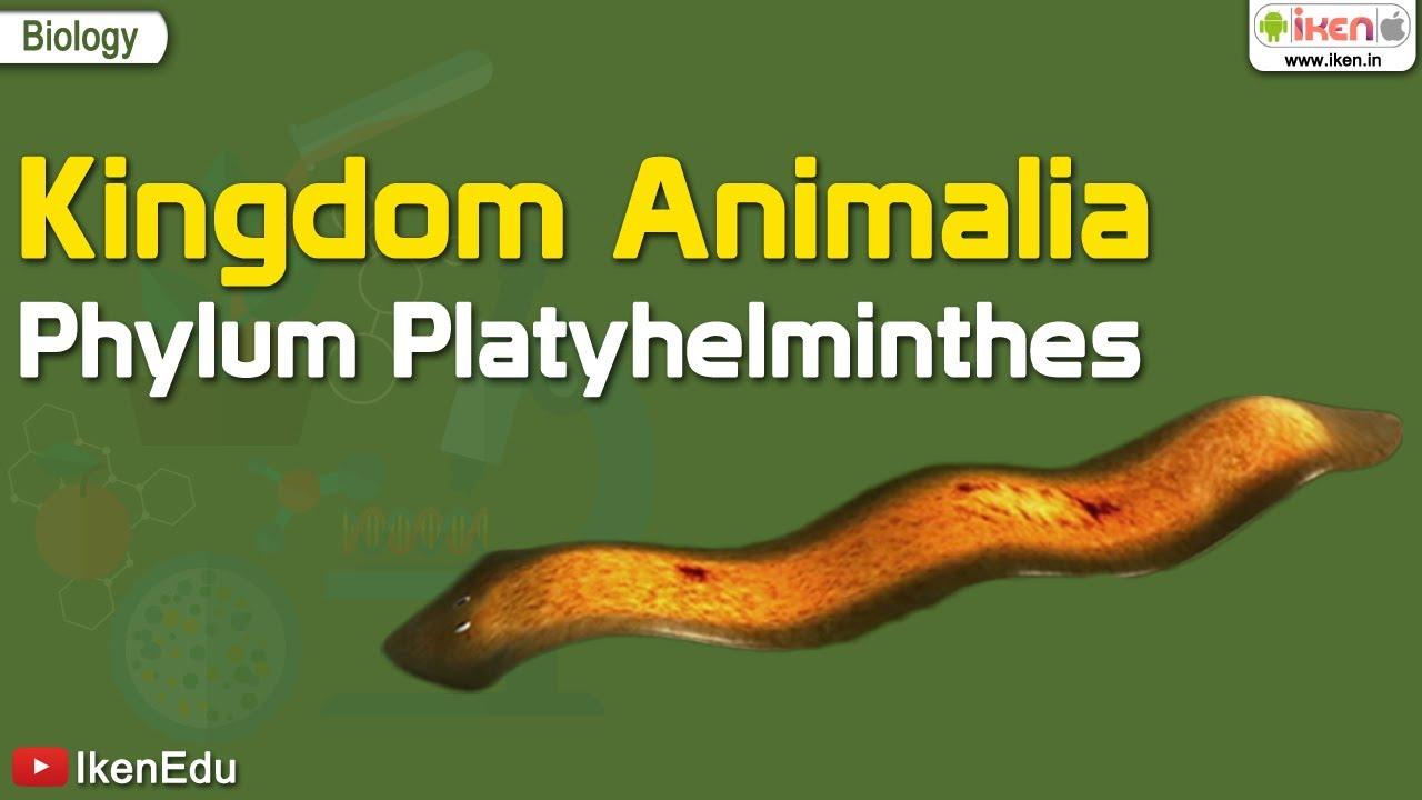 Platyhelminthes 3 osztály. Laposférgek – Platyhelminthes