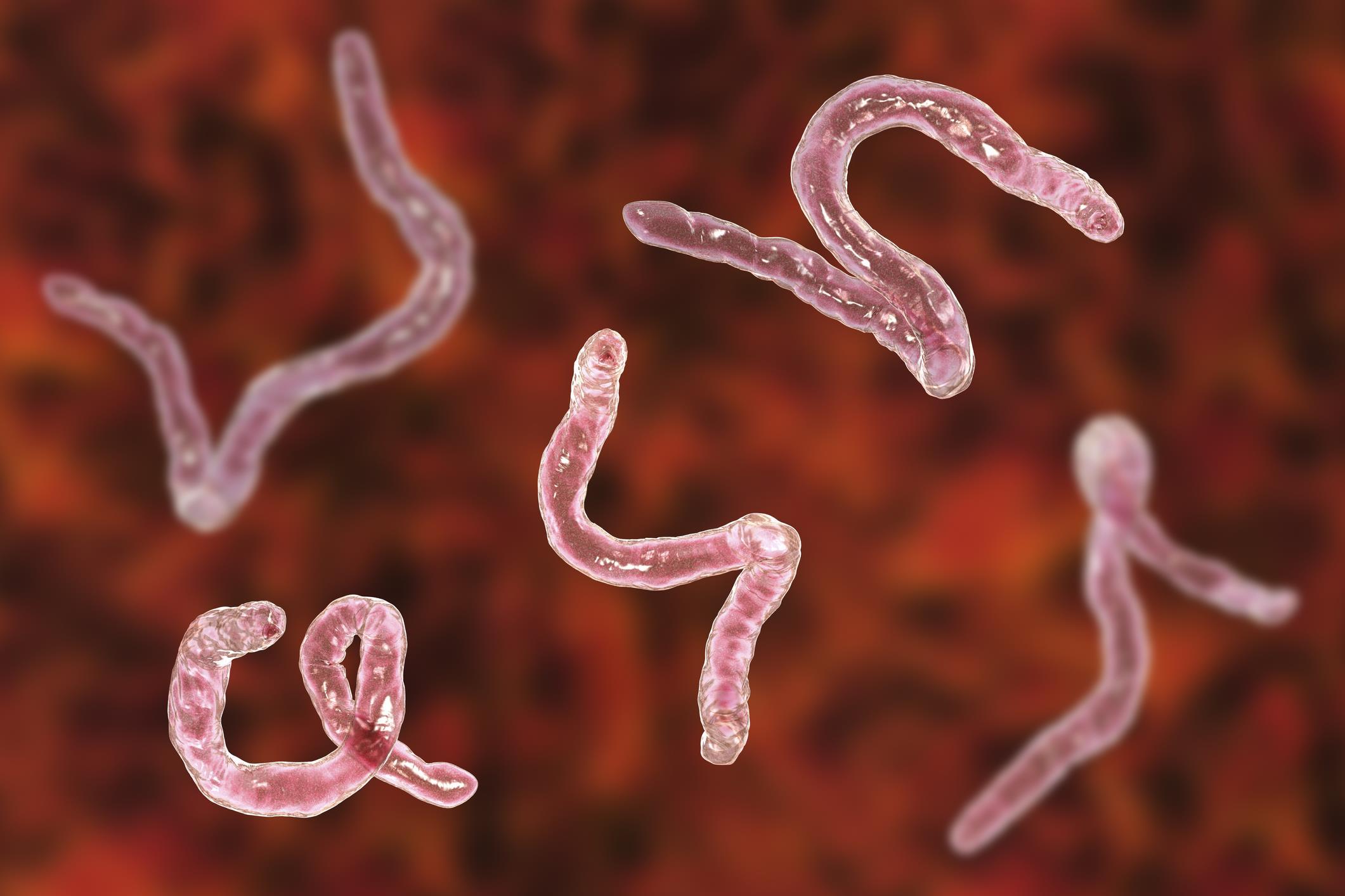 sintomas de helminthosporium turcicum férgek paraziták