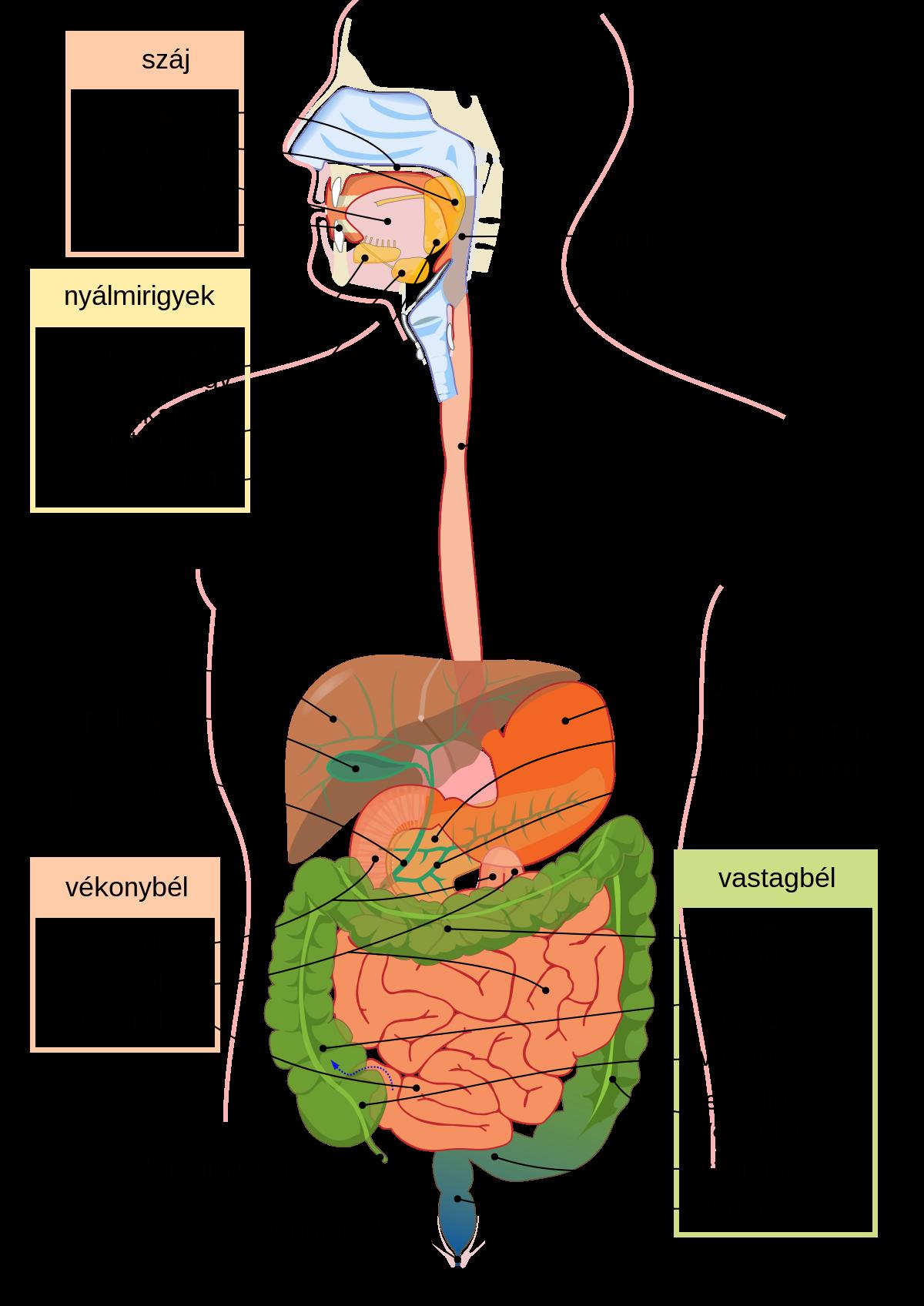 a parazitak tunetei az emberi test kezeleseben mi ürül a férgekkel