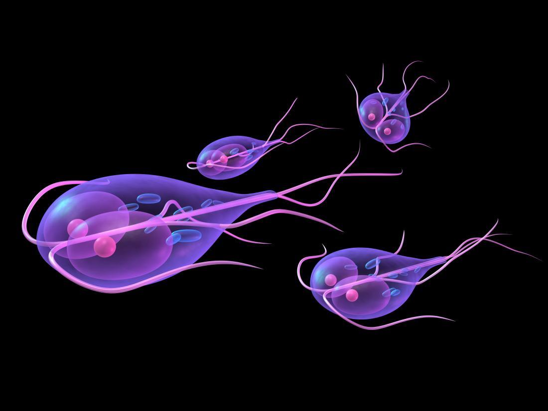 giardia parasites in humans