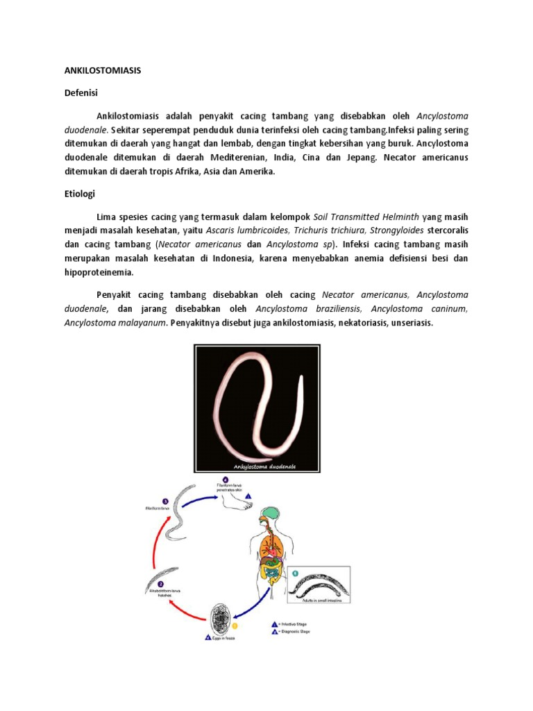 Ankilostomiasis tünetek - Ankilostomiasis tünetek emberben és a kezelés - thetagodollo.hu