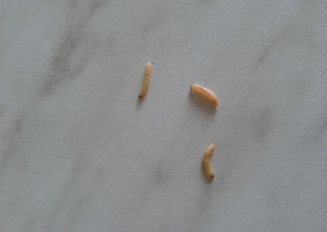 mérgező 24 ru pinworms székrekedés