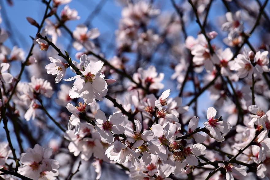 szaga a fehér virágzástól